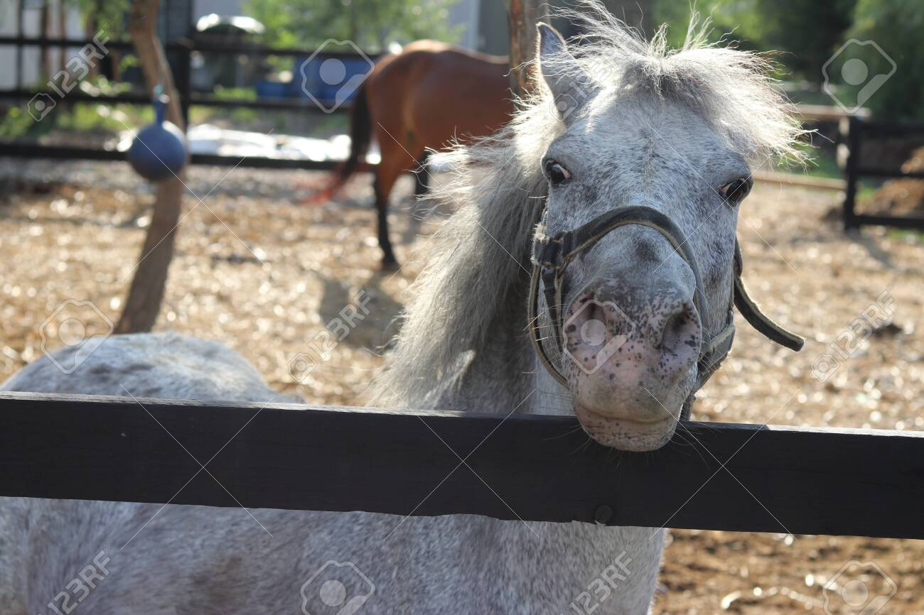 A Funny Looking Horse On A Wooden Fence Stock Photo Picture And Royalty Free Image Image 106661595