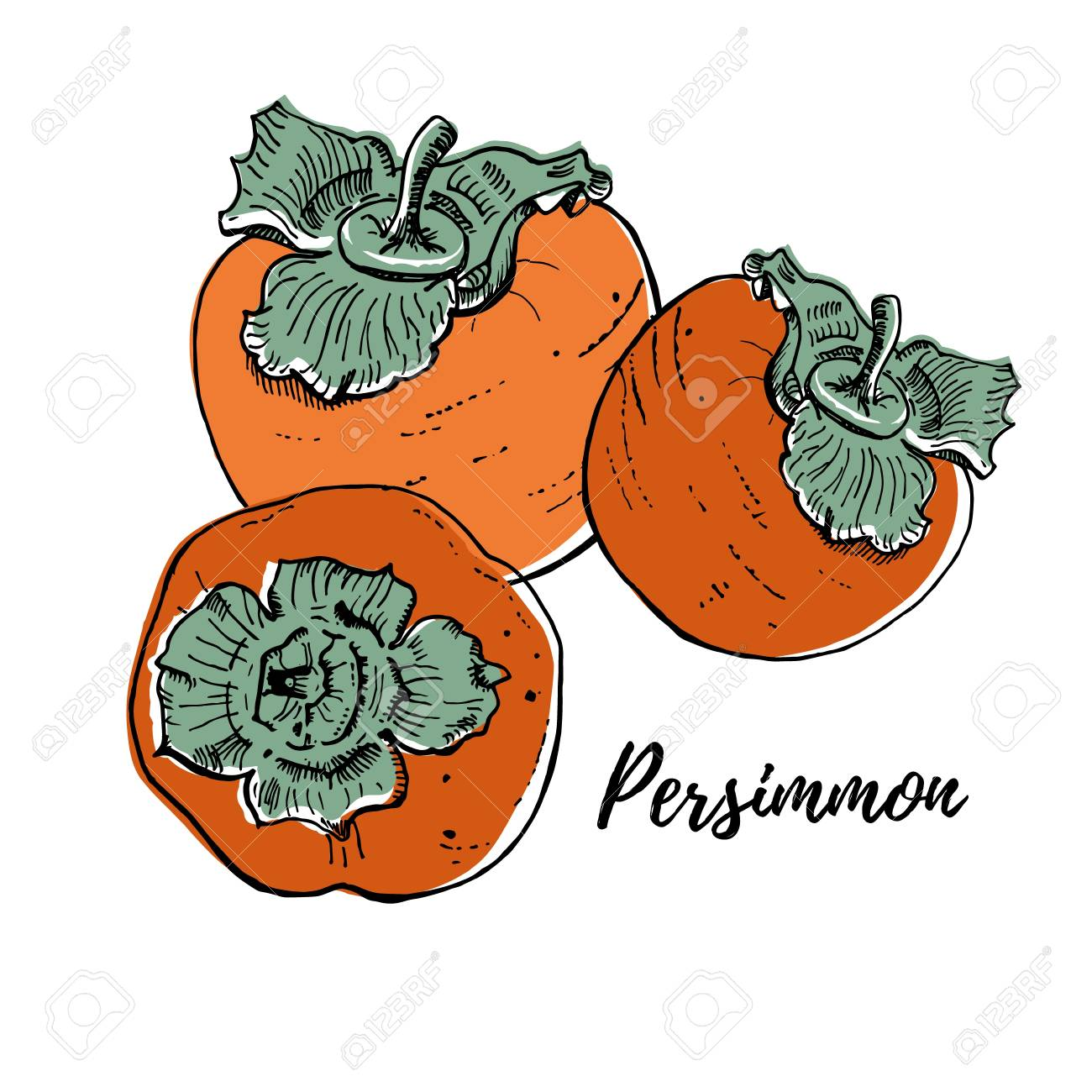 Ripe fresh persimmons vector illustration isolated on white. Three orange bright fruits. Realistic, delicious drawing. Hand drawn - 117731459