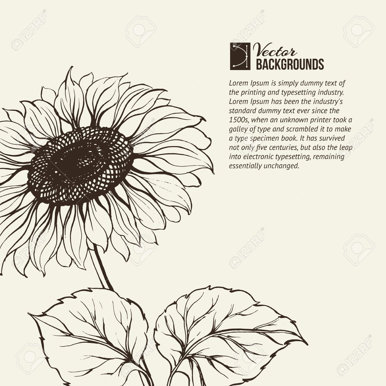 Illustration of sunflower  Vector illustration, contains transparencies, gradients and effects Stock Vector - 18737930