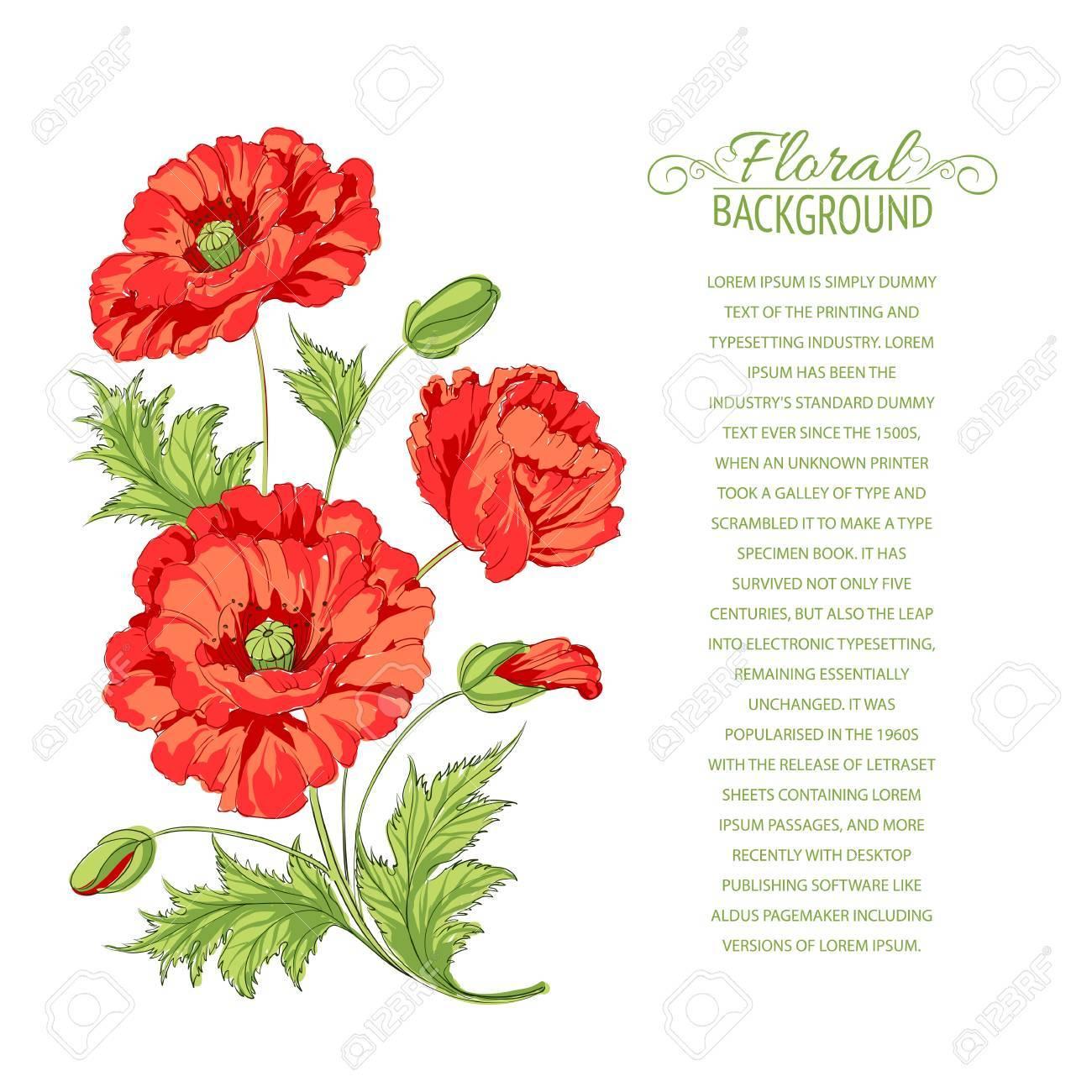 Red poppy card illustration Stock Vector - 19877281