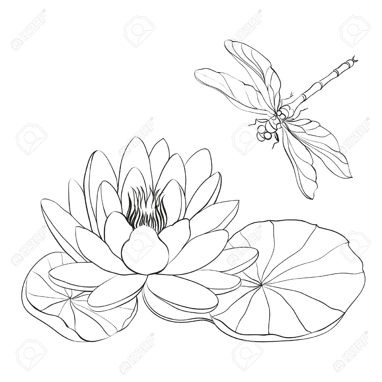 dragonfly stock photos u0026 pictures royalty free dragonfly images