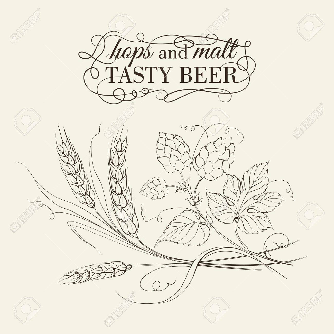Wheat and hop on sepia. Vector illustration. Stock Vector - 21857898