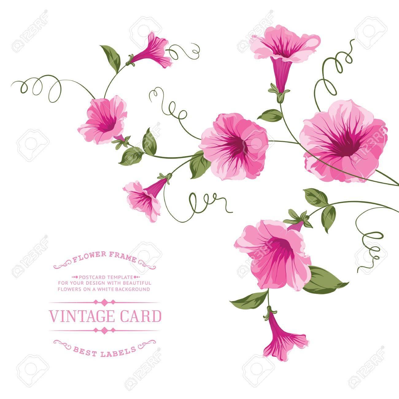 Enredadera De Flores Para El Diseño De Tarjeta De La Vendimia