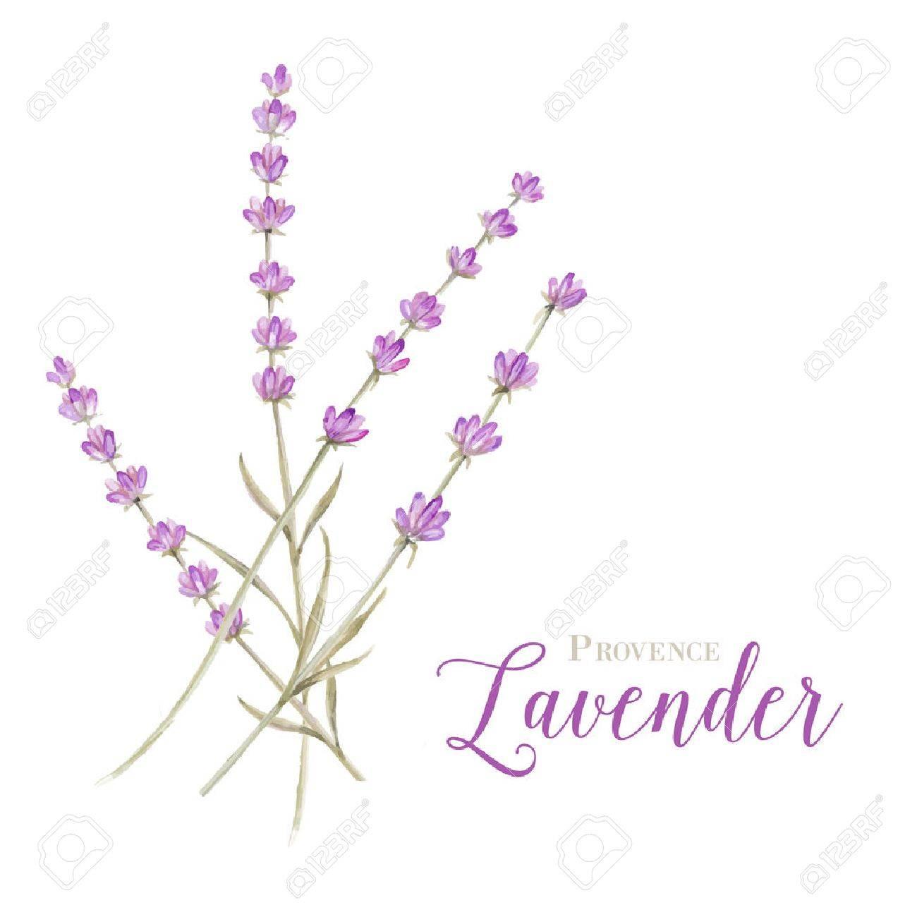 Etiqueta Con Flores De Lavanda Y El Marco Del Damasco. Ilustración ...