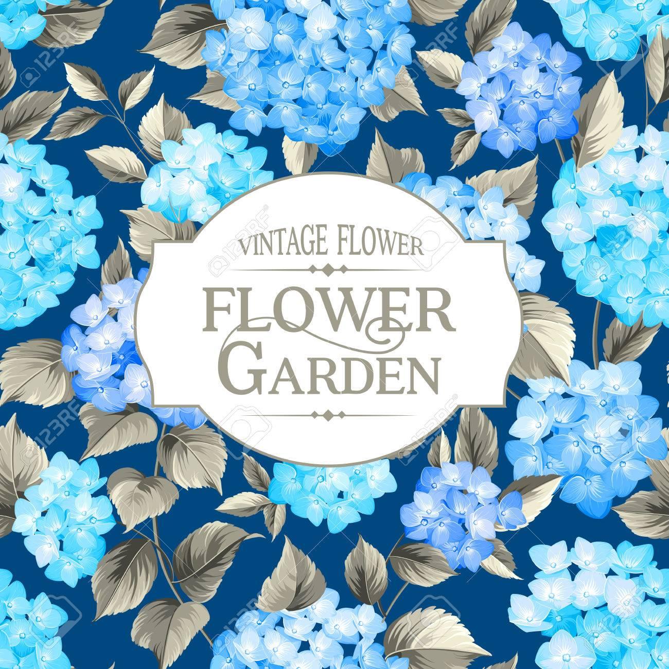 Hydrangea Flowers Vintage Frame Blue Flowers Royalty Free