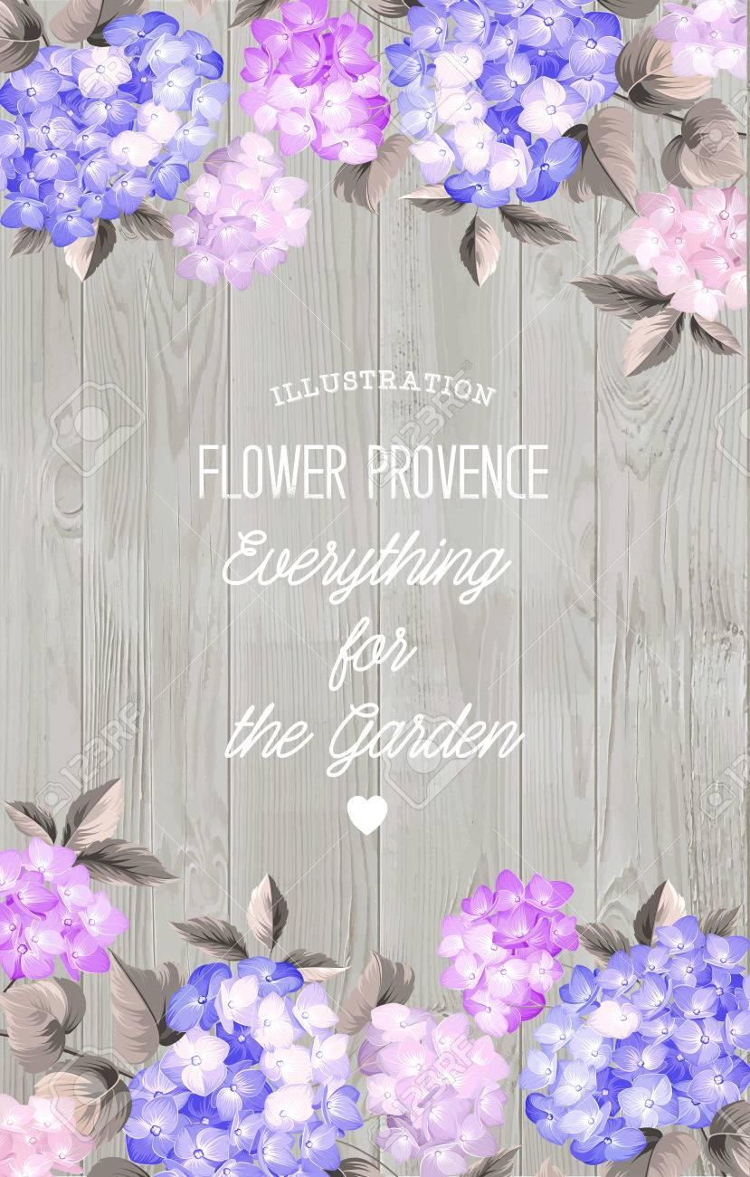 Beautiful Purple Flower Of Hydrangea. Wedding Card And Engagement ...