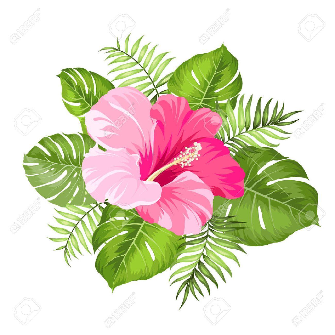 Fleur Tropicale Isole Sur Fond Blanc Vector Illustration Clip Art