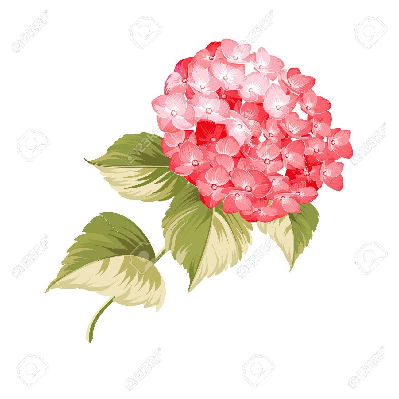 Flor De Hortensia Hortensias Realista Roja Ilustracion De Flores