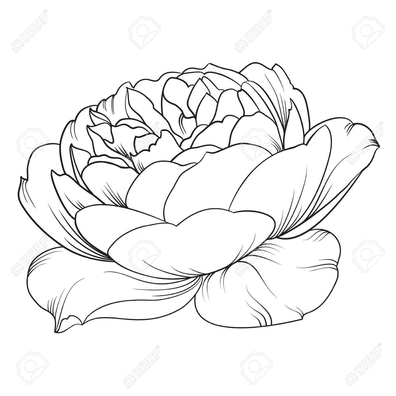 Silhouette Of Rose Rose Flower Botany Set Black And White
