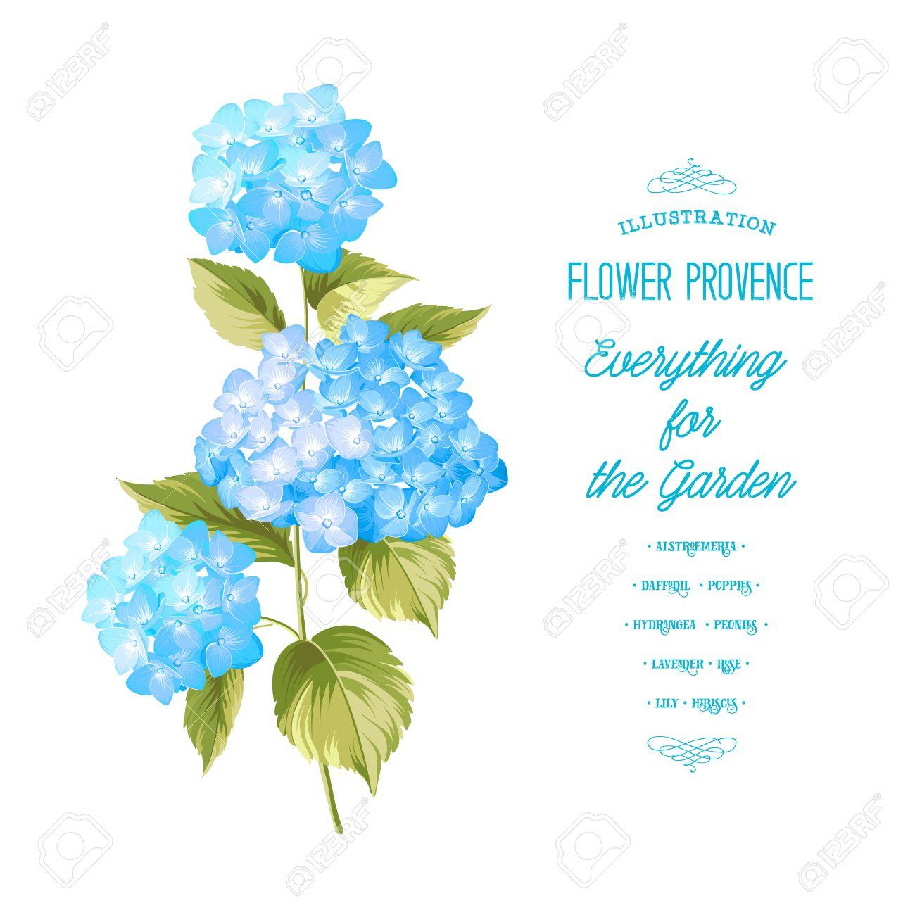 Flor De Hortensia Hortensias Realista Azul Ilustracion De Flores