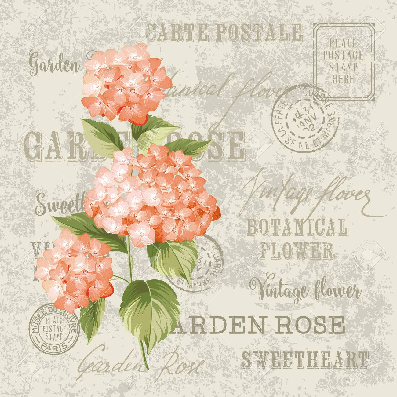 Red flowers design for invtation card template. Vintage postcard background vector template for wedding invitation. Label with hortensia flowers. Stock Vector - 49346900