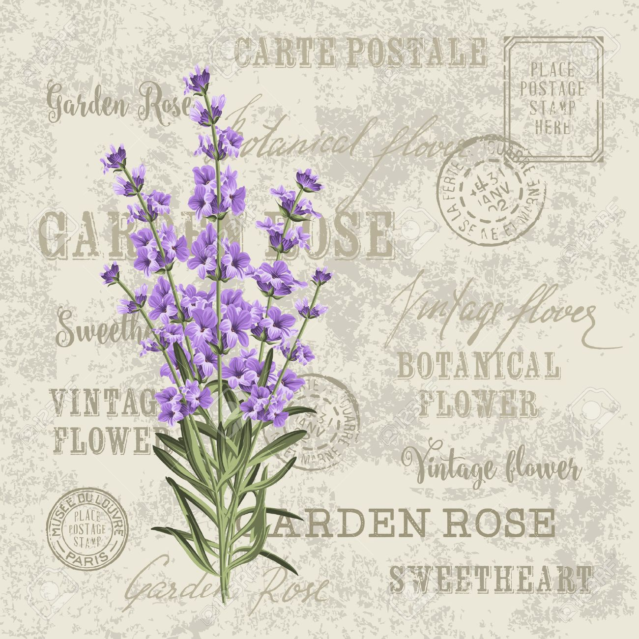 The lavender elegant card vintage postcard background vector vintage postcard background vector template for wedding invitation label with lavender flowers stopboris Choice Image