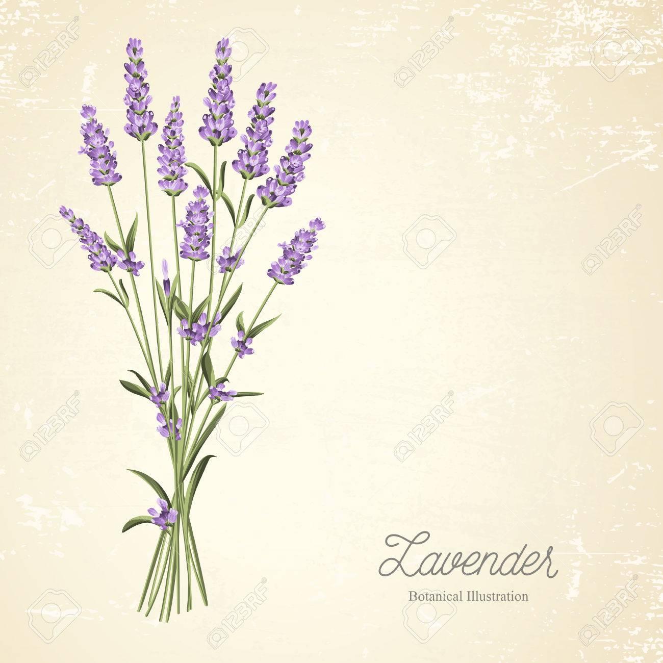 The Lavender Elegant Vintage Card. Blossom Flowers. Bouquet Of ...