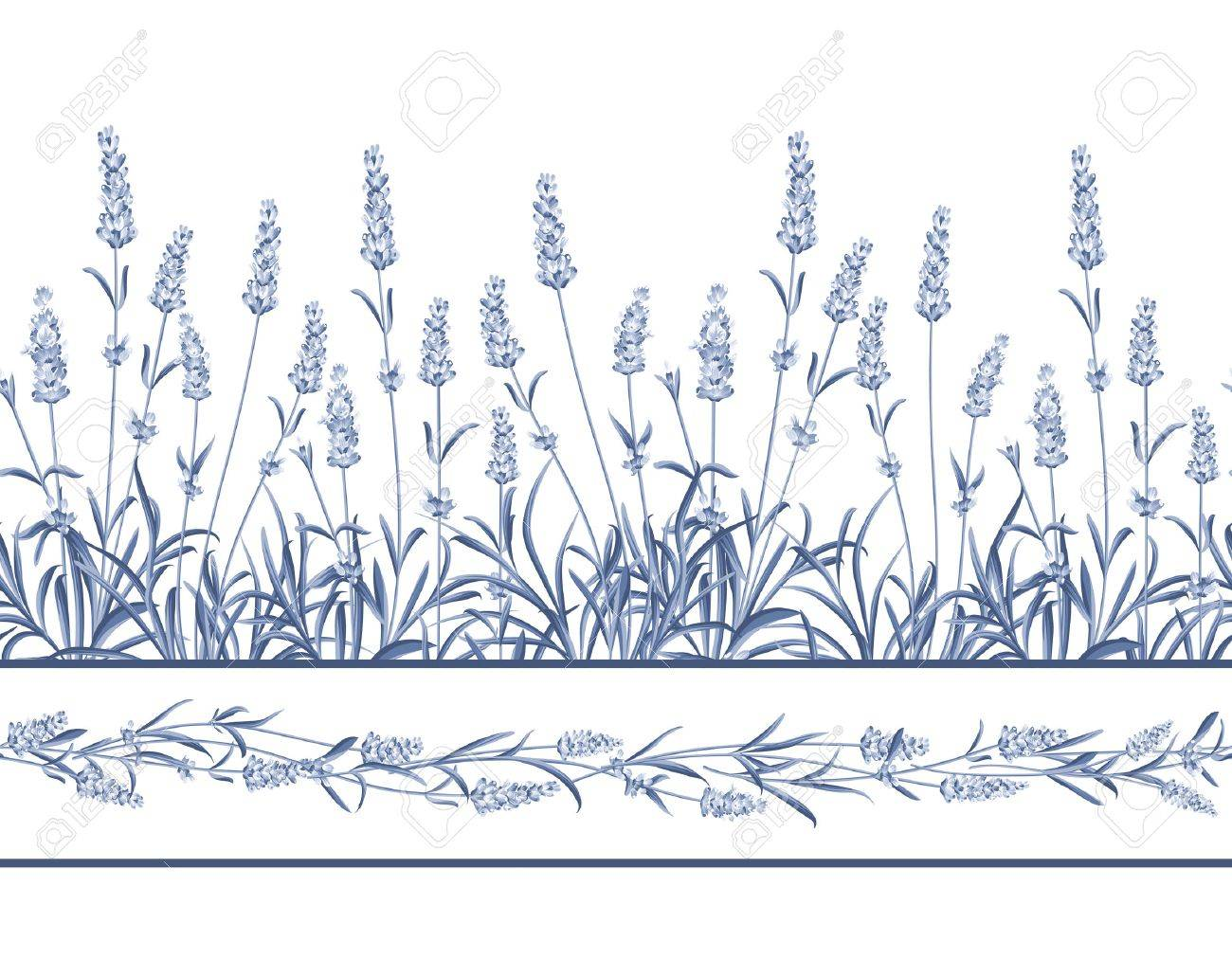 The Lavender Seamless frame line. Bunch of lavender flowers on a white background. Vector illustration. - 50921312
