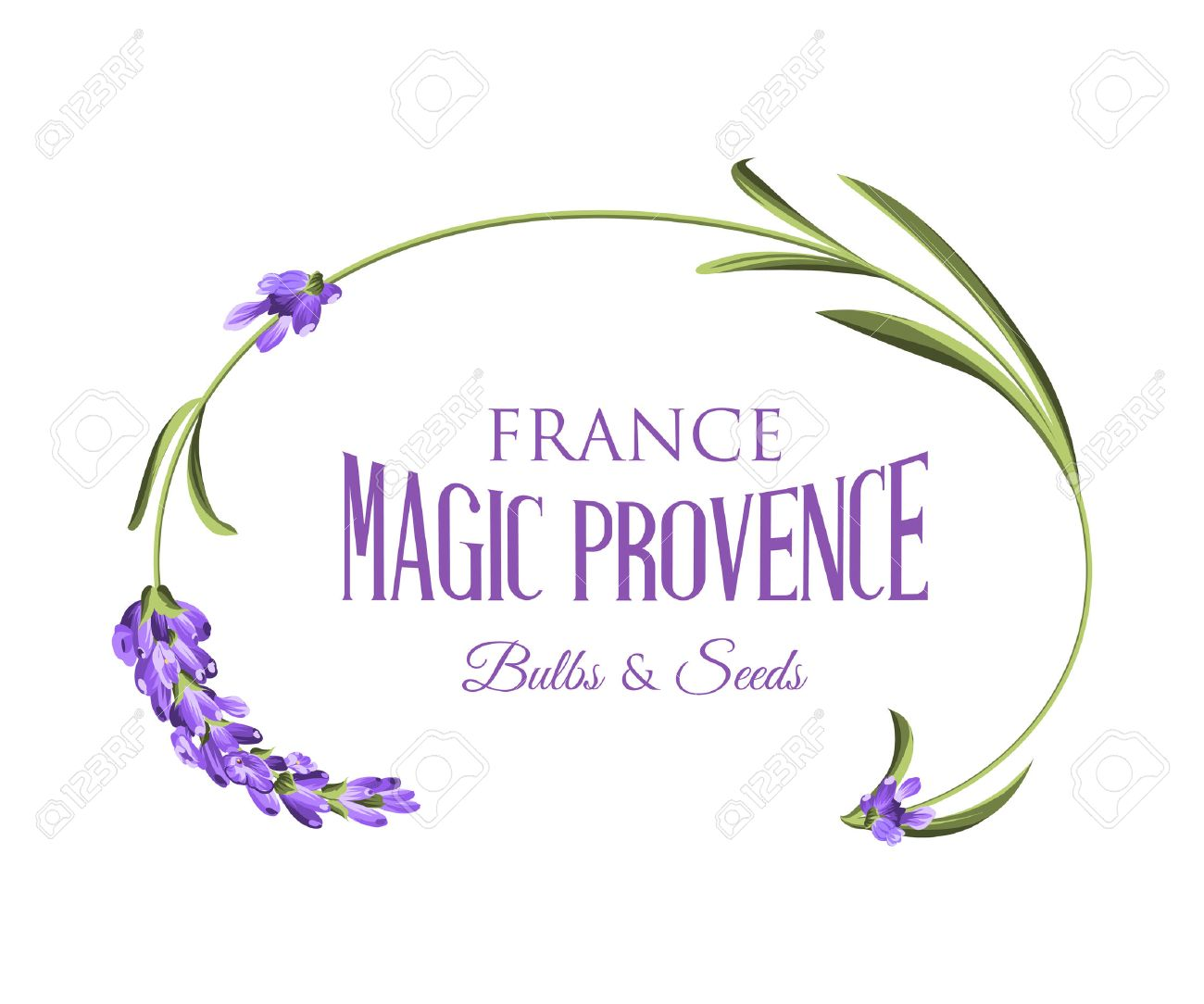 Label with lavender flower and flower frame. Vector illustration. - 50920544