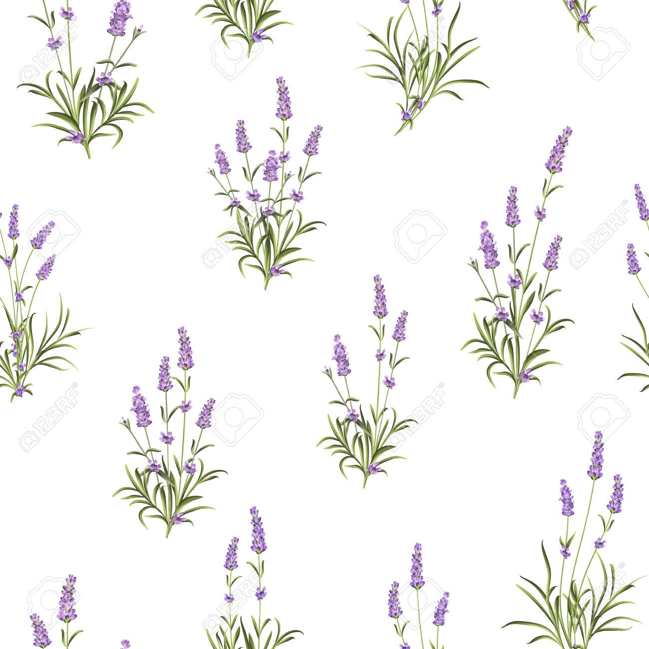 The Lavender Seamless pattern. Bunch of lavender flowers on a white background. Vector illustration. - 51374937