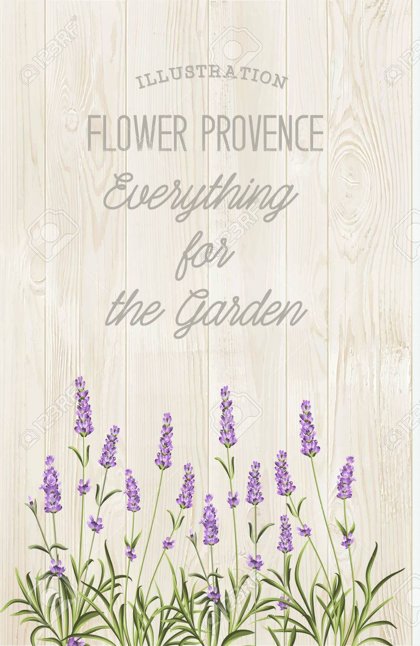 The lavender elegant card with bouquet of flowers and text. Lavender garland for your text presentation. Label of soap package. Label with wooden texture. - 51446908