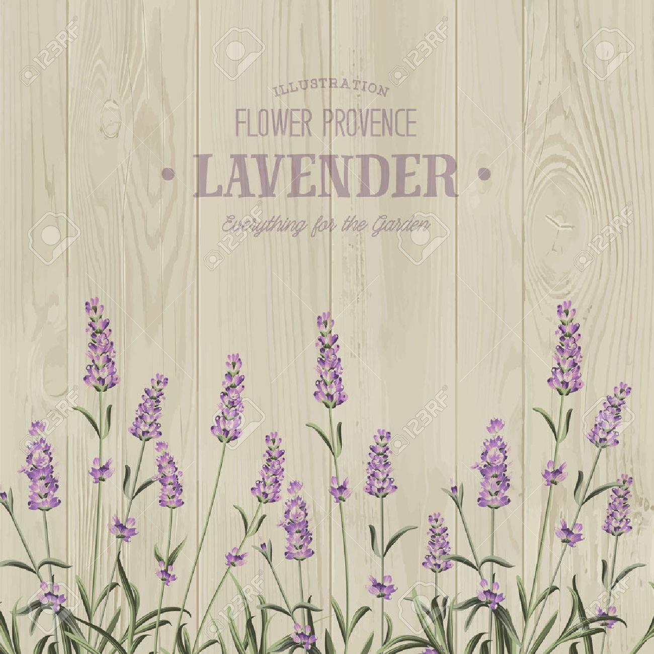 The lavender bouquet with text template over wooden texture the vintage postcard background vector template for wedding invitation vector illustration stopboris Images