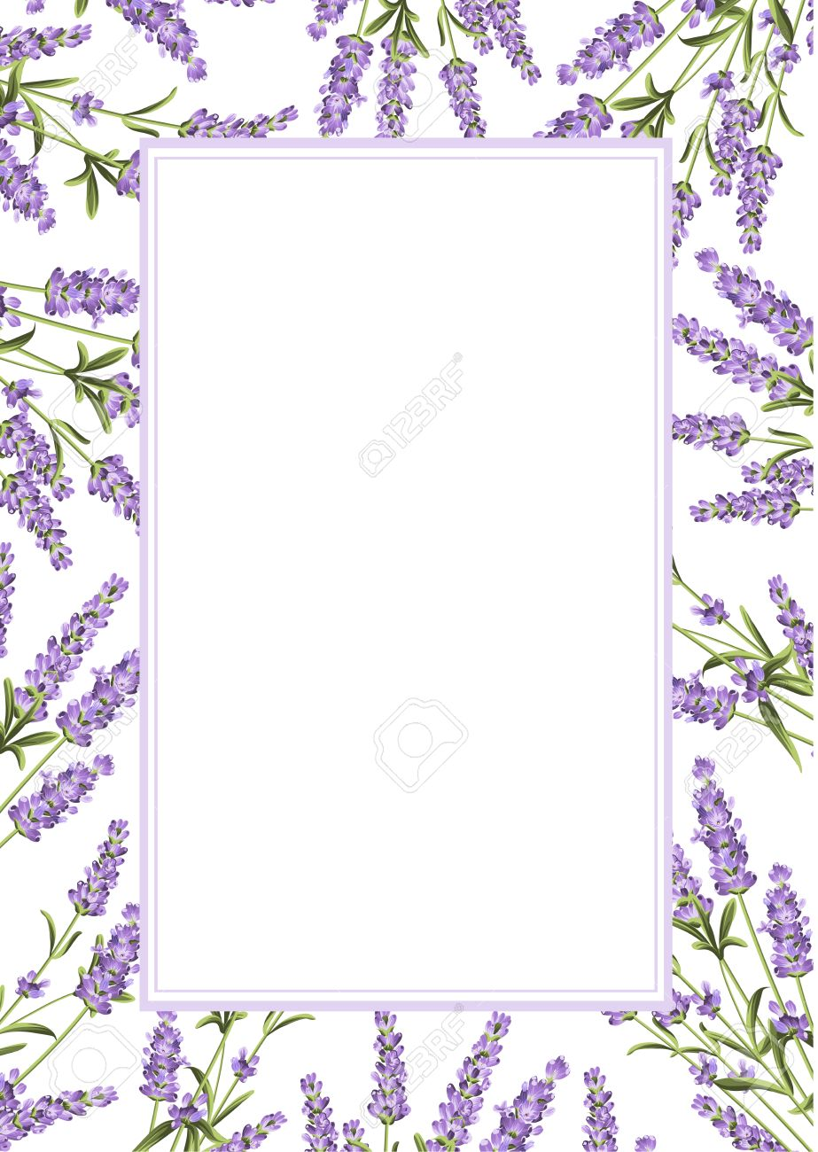 The Lavender frame line. Bunch of lavender flowers on a white background. Vector illustration. - 54294734