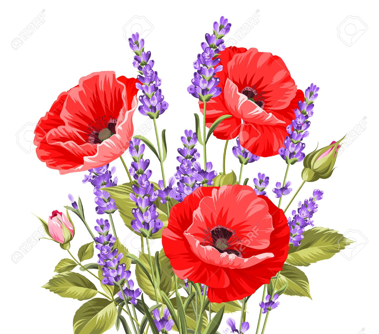 I love you card. Bunch of lavender and poppy flowers on a gray background. Lavender and poppy card for paper, label and other printing or web projects. Label with poppy flowers. Vector illustration. - 54294384