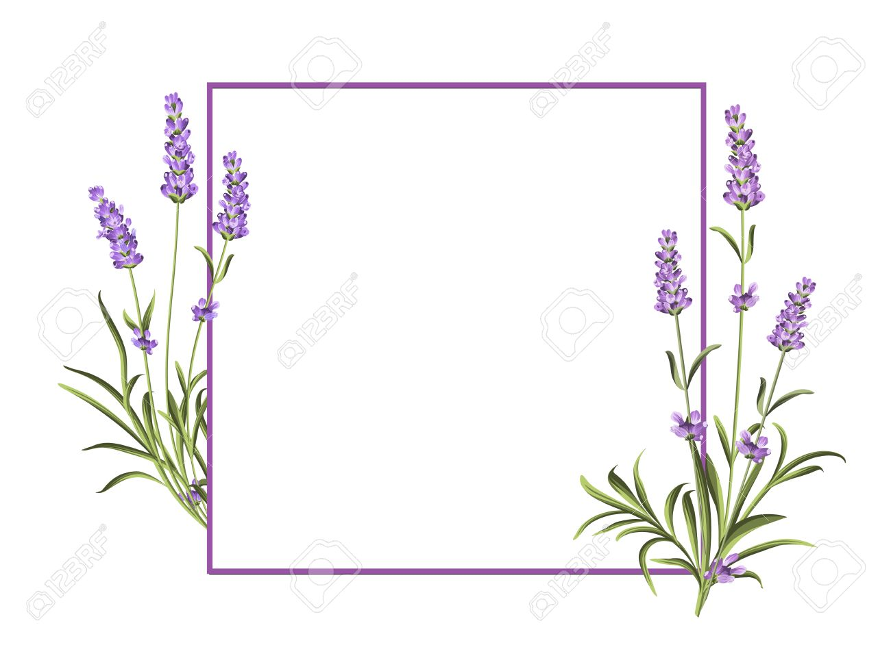 Bunch of lavender flowers on a white background. Marriage invitation card template. Vector illustration. - 56485933
