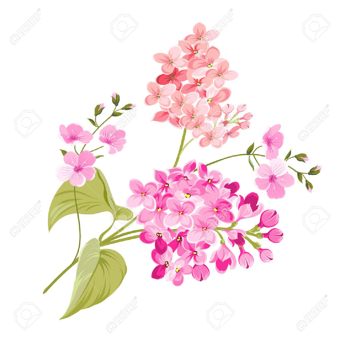 Purple lilac flowers of syringa isolated on white background purple lilac flowers of syringa isolated on white background spring flowers vector illustration mightylinksfo