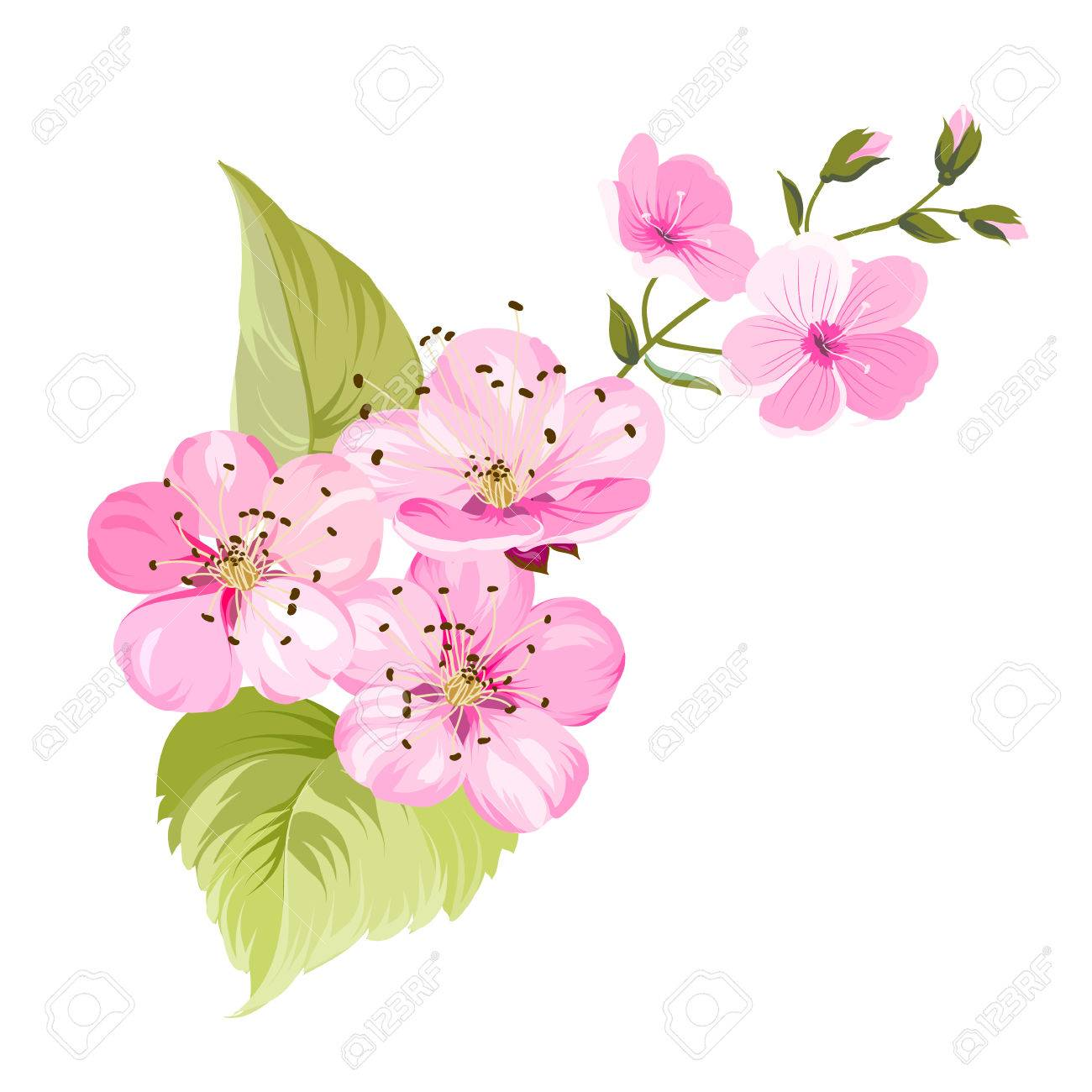Sakura Flowers For Spring Background Cherry Blossom Vector