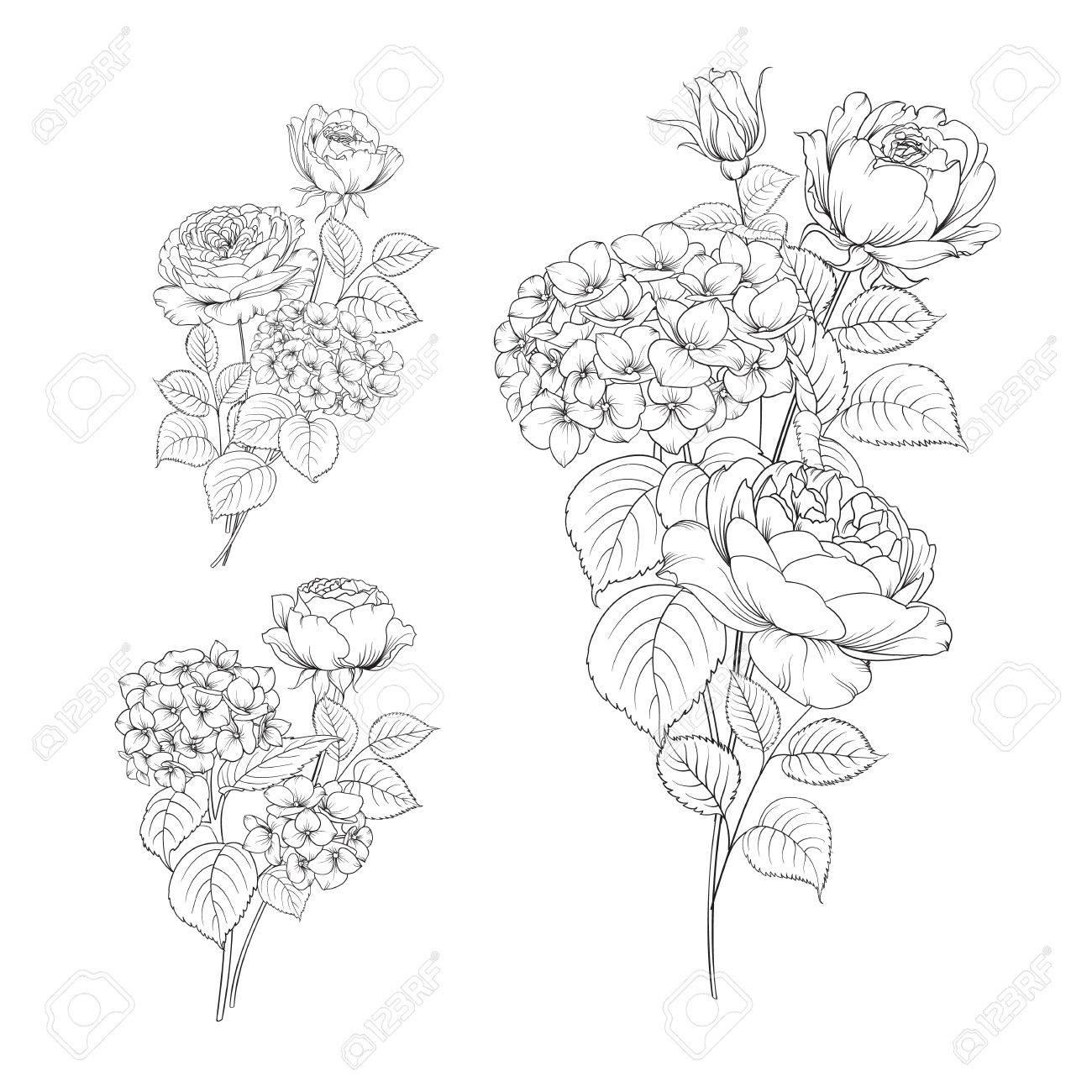 Blumengirlande Von Hortensien Und Stieg Auf Weissem Hintergrund