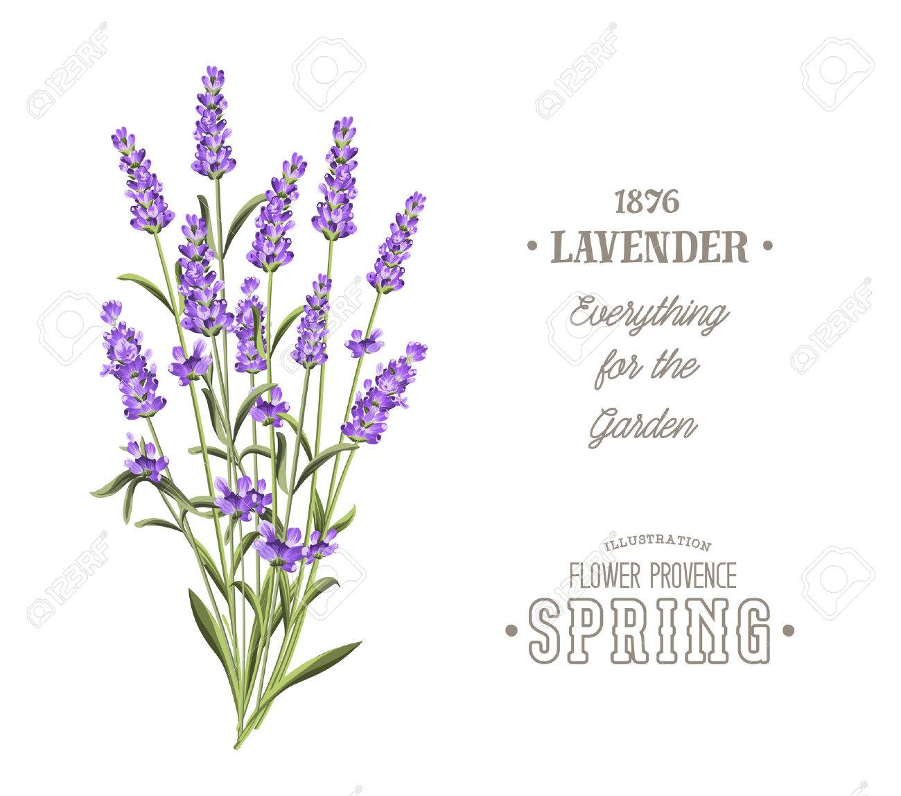 Bouquet Of Aromatic Lavender Flowers Invitation Card Template