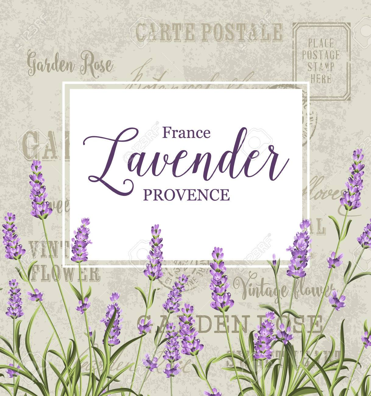 The lavender elegant card vintage postcard background vector vintage postcard background vector template for wedding invitation label with stopboris Choice Image