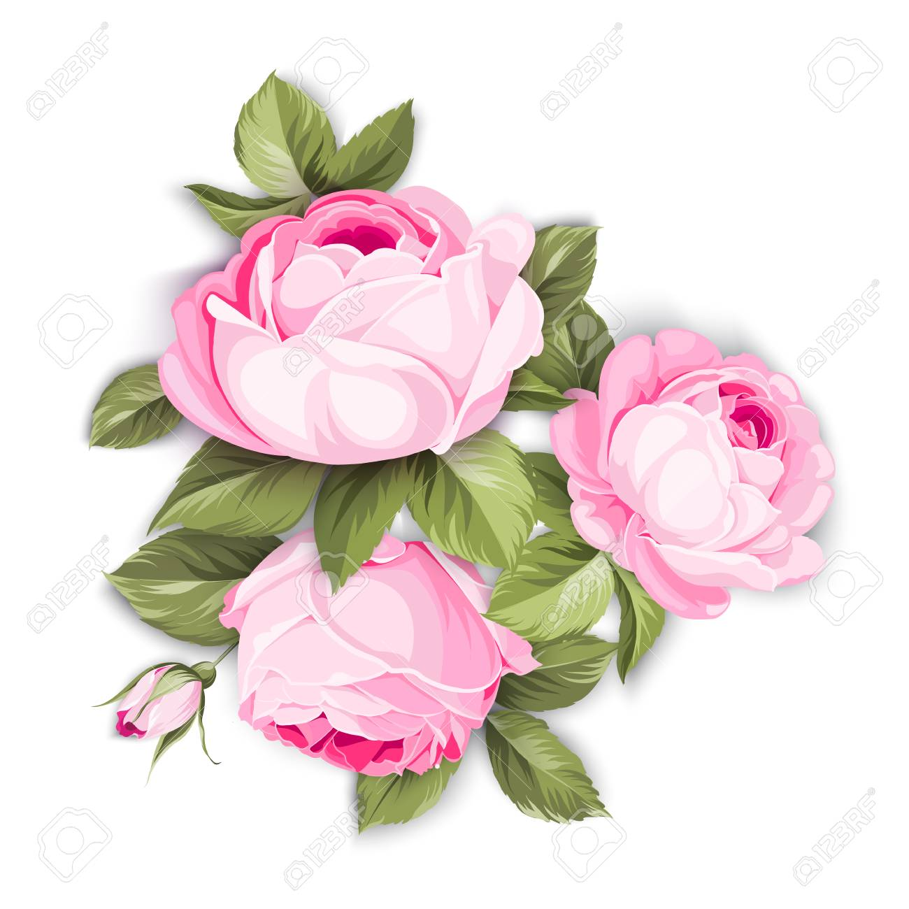 The Blooming Rose With Couple Of Small Flowers Botanical Vector