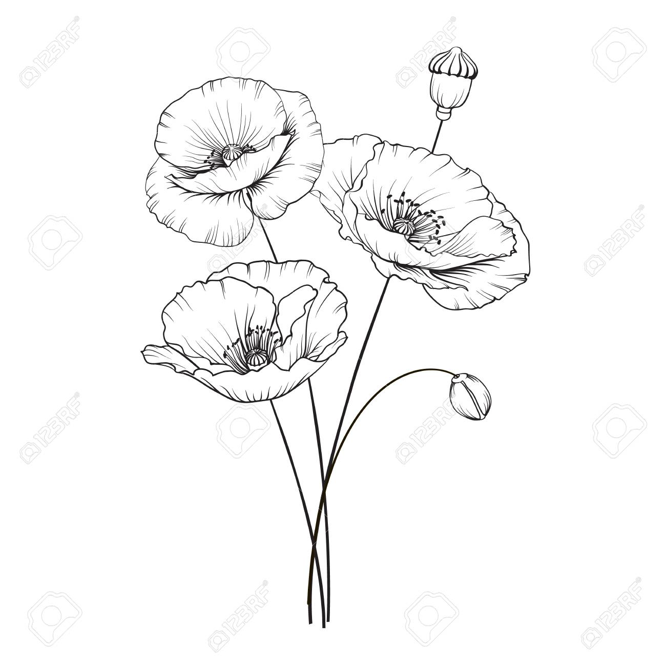 Poppies Flowers In Black And White Illustration Royalty Free