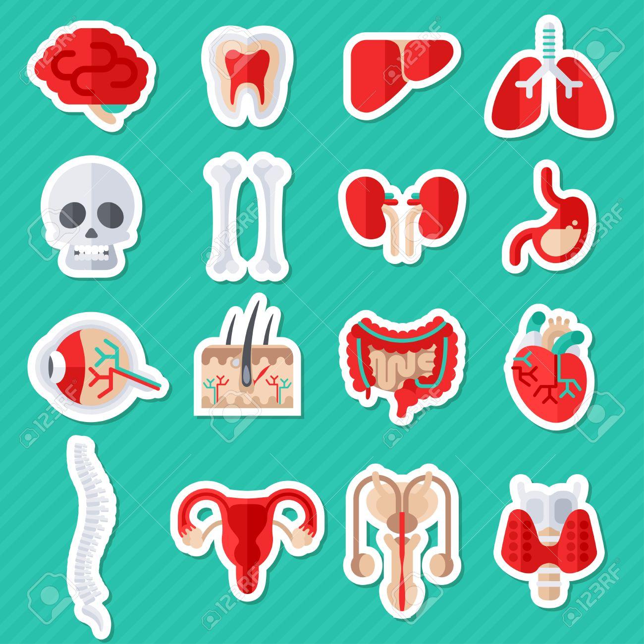 Rganos Humanos Internos Plana Los Iconos Conjunto De Stickers ...