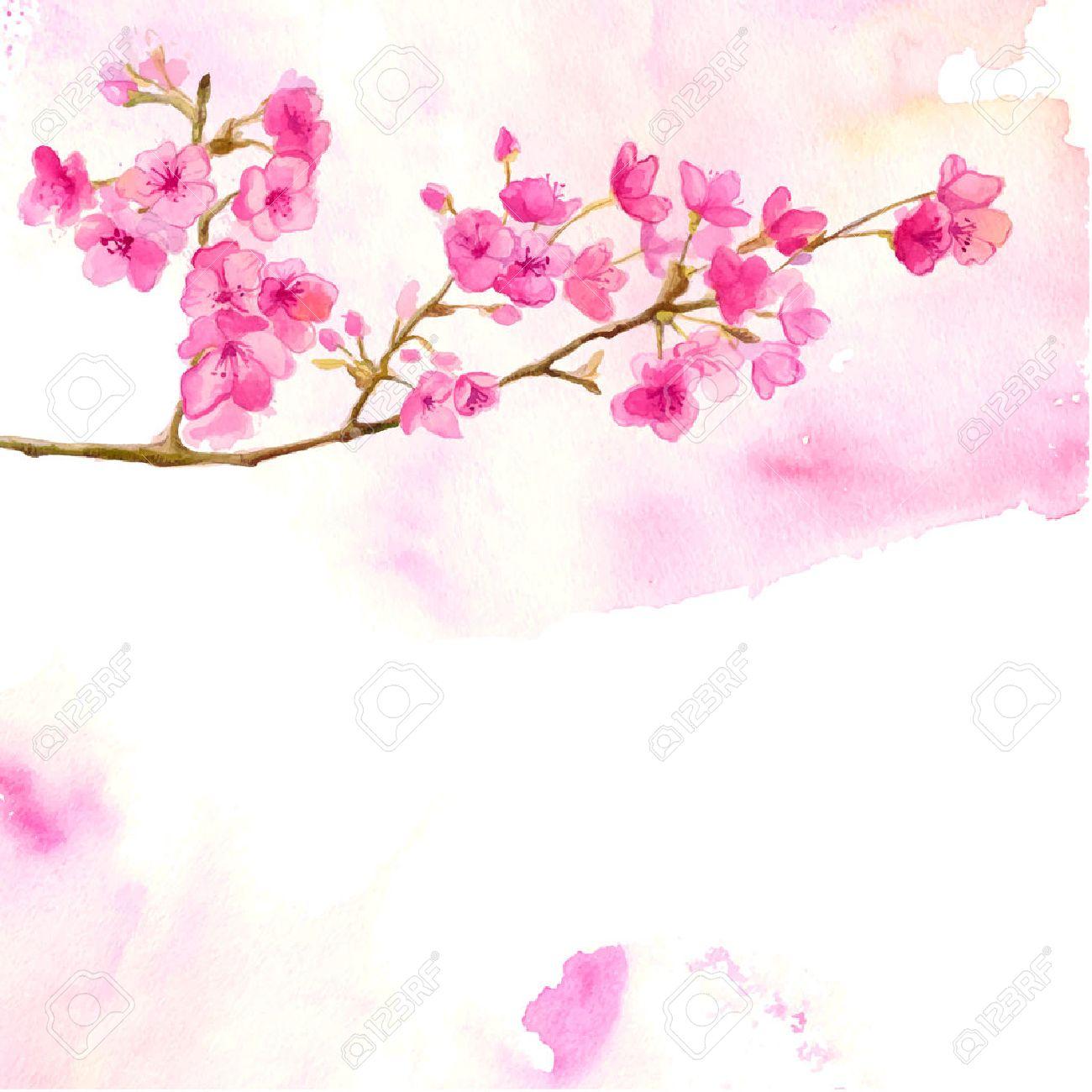 桜の枝とピンクの背景。さくらのベクトルの水彩イラスト。 ロイヤリティ