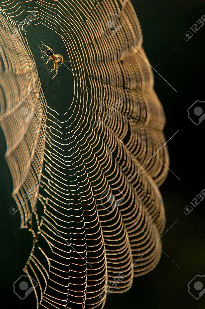 Spider sitting in center of the web Stock Photo - 3245498