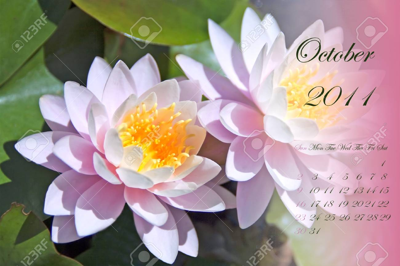 Page of 2011 calendar for October, with white and pink waterlilies Stock Photo - 8130472