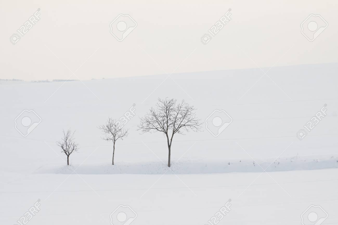 Three trees of different height in landscape totally full of snow Stock Photo - 12392350