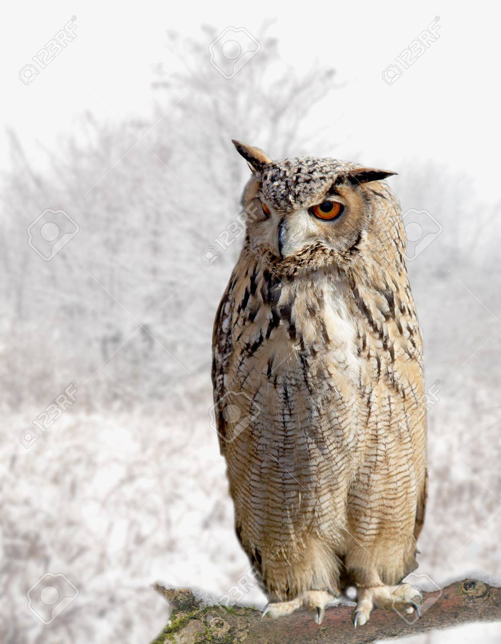 Close up of an owl standing on the branch of a tree Stock Photo - 17090566