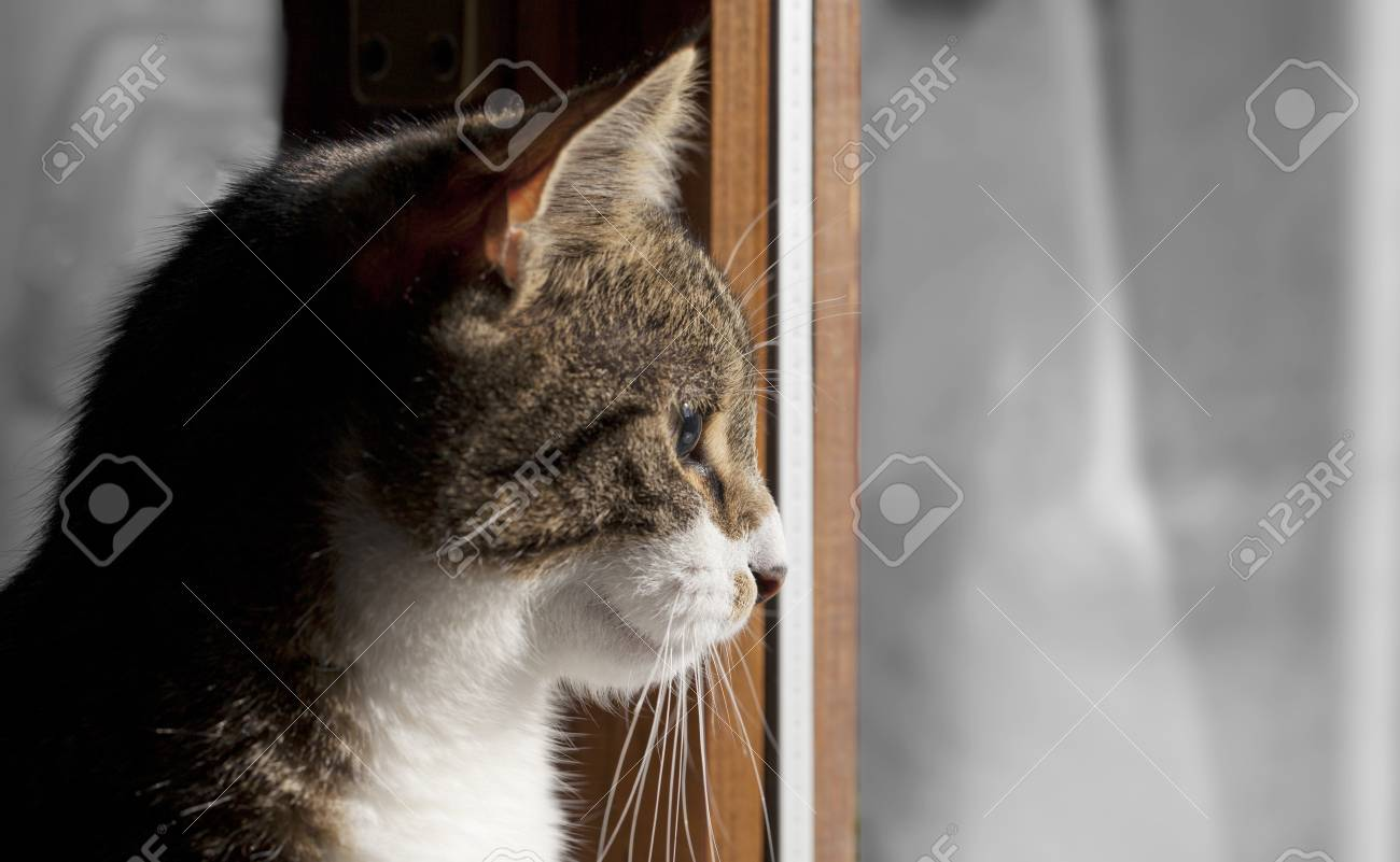 A standing cat in front of a window Stock Photo - 18062915