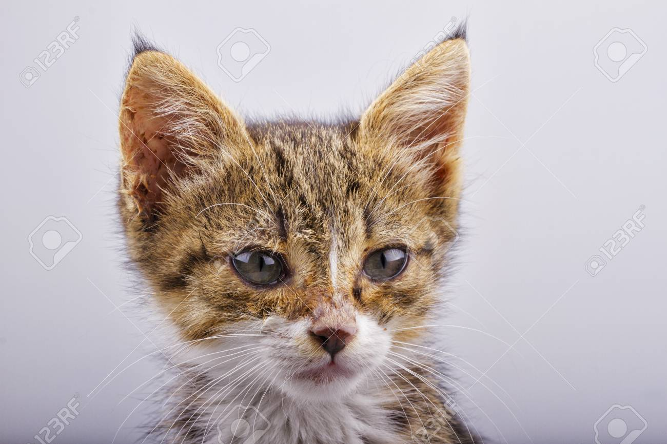 Close up of face of little and cute cat Stock Photo - 18934960
