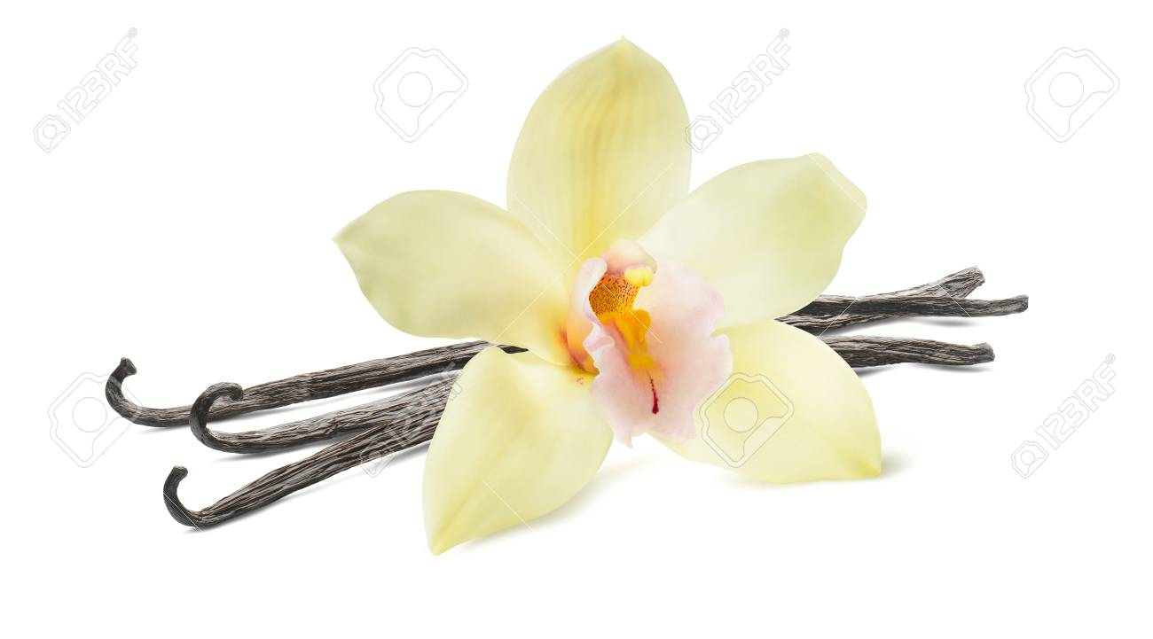 Vanilla stick and flower isolated on white background as package design element - 76560189