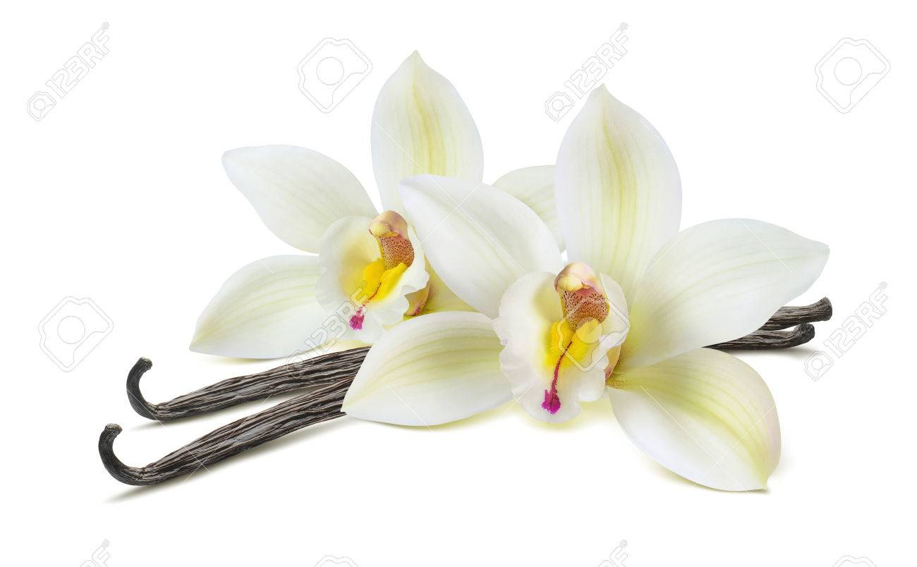 Double vanilla flower pod isolated on white background as package design element - 78206791
