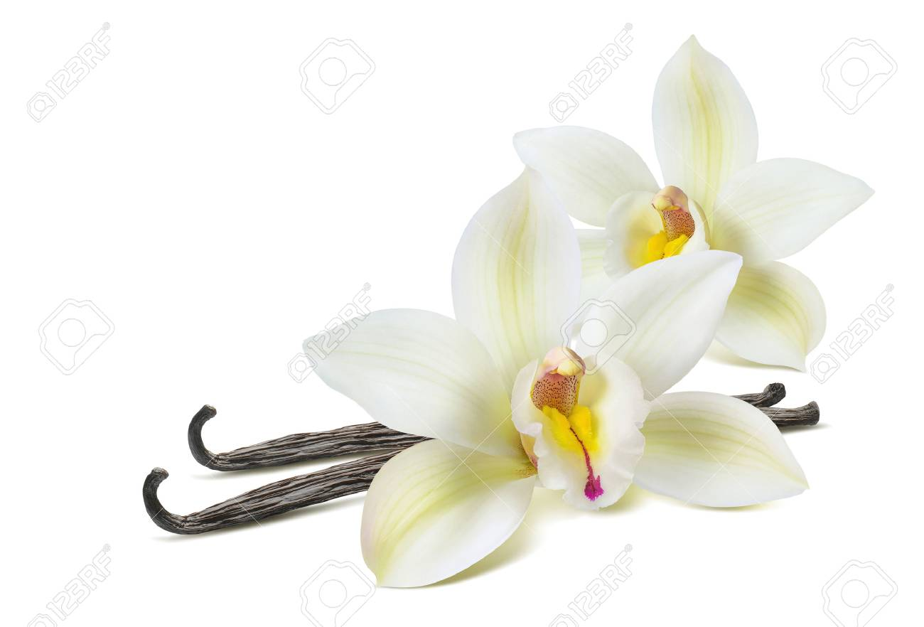 Double vanilla flower 2 isolated on white background as package design element - 77906310