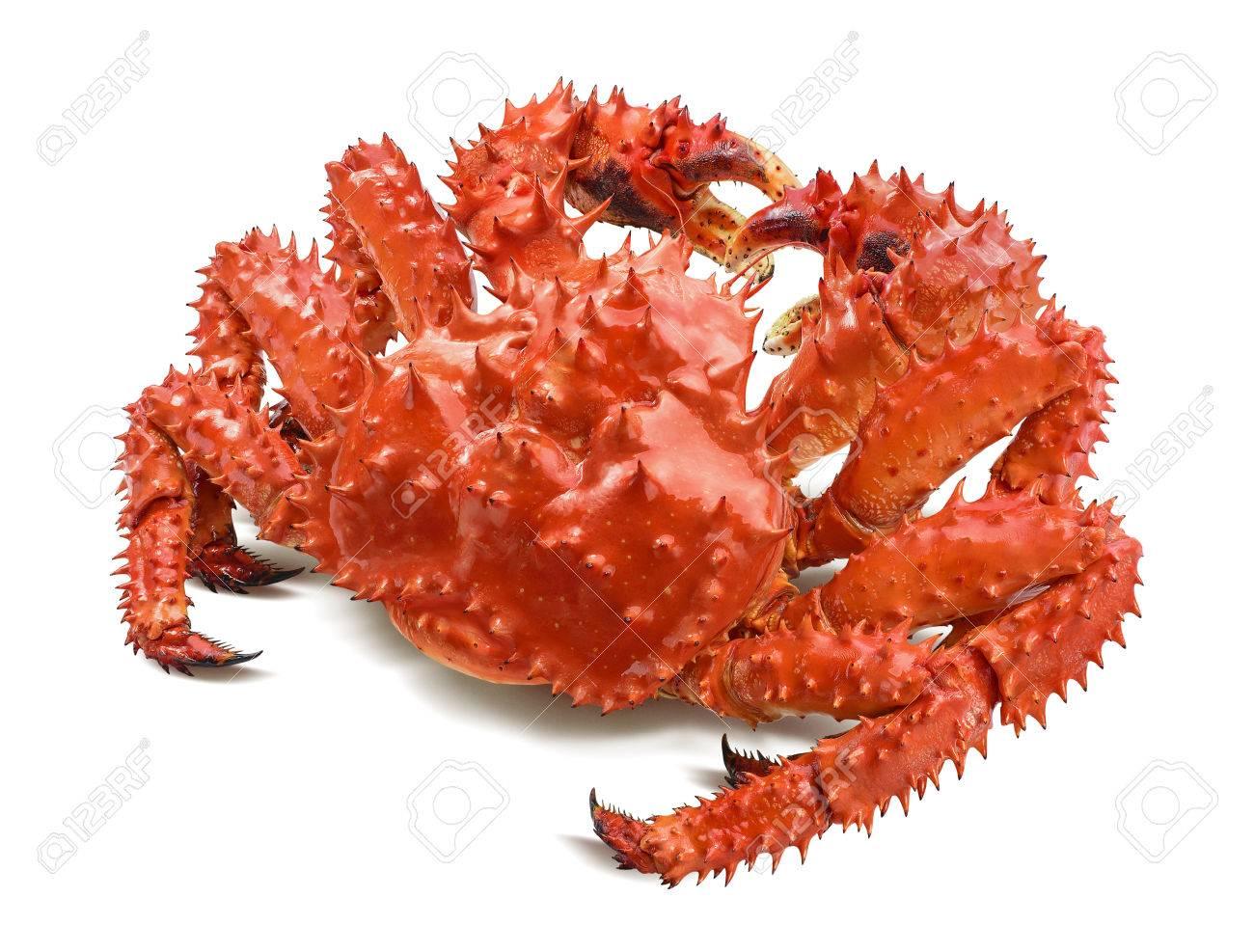 Kamchatka king crab isolated on white background, back view - 83981199