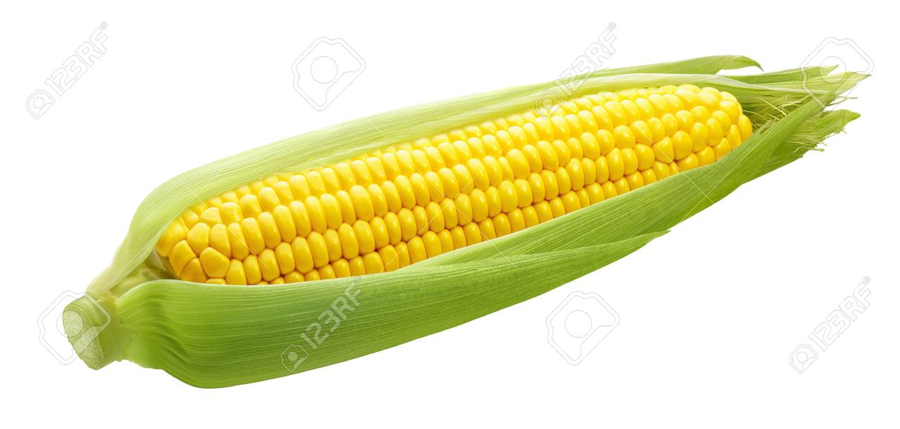 Fresh ear of corn isolated on white background as package design element - 92683898
