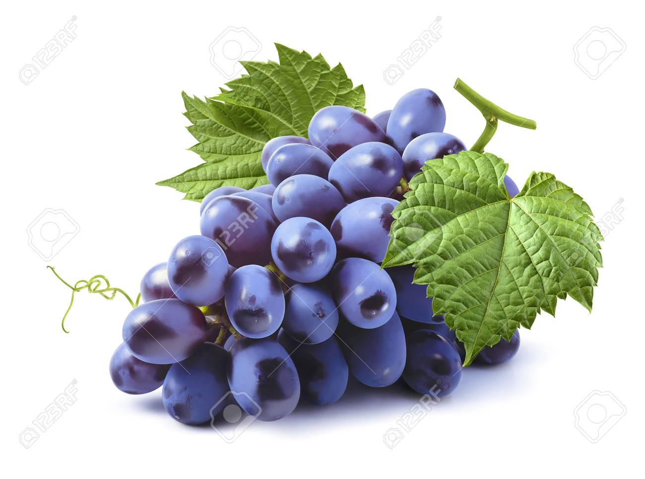 Blue grapes bunch isolated on white background as package design element - 95622500