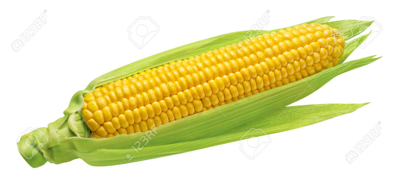 Corn cob with green leaves isolated on white background. Package design element with clipping path - 106921432