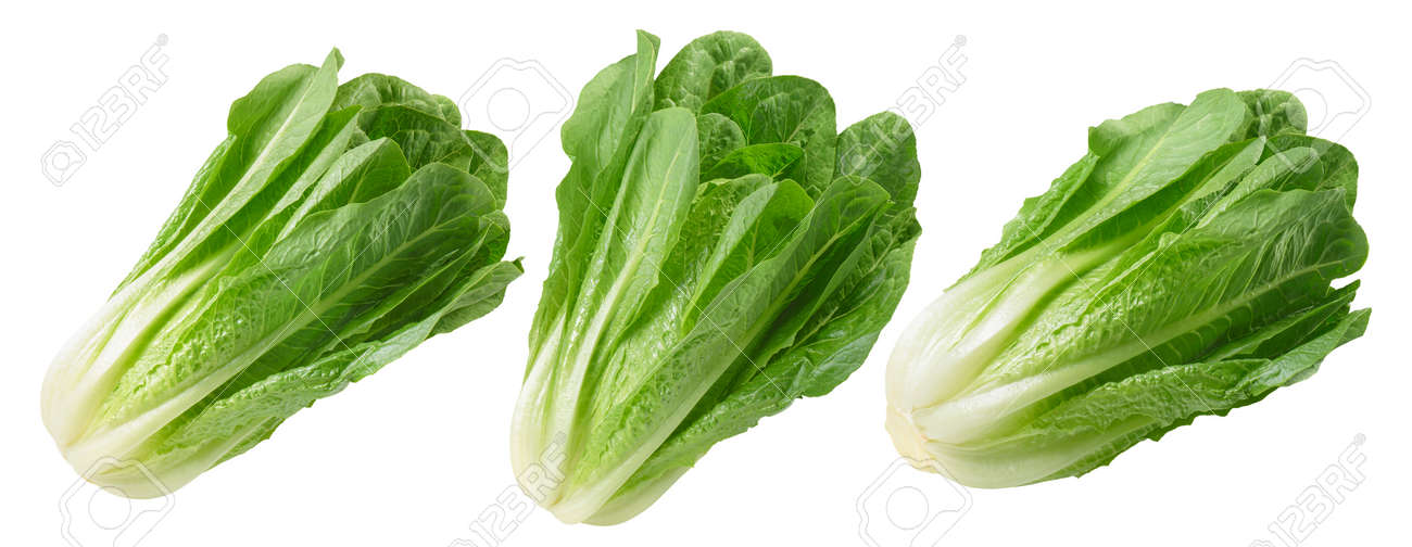 Romano salad set isolated on white background. Package design element with clipping path. Full depth of field - 170339464