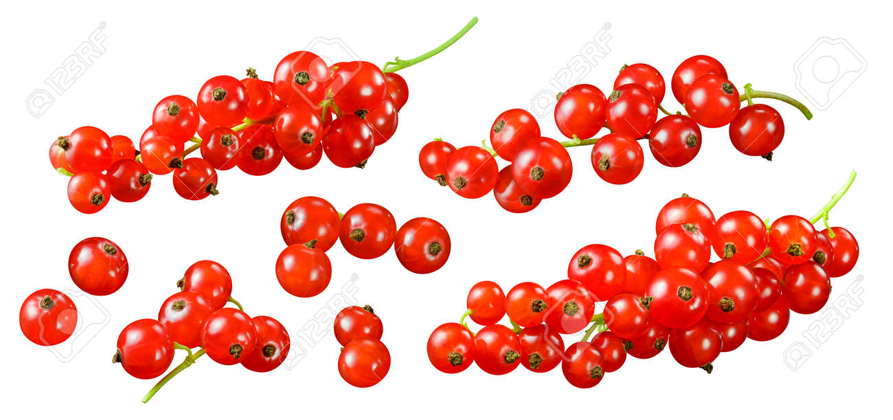 Red currant clusters set isolated on white background. - 173414000