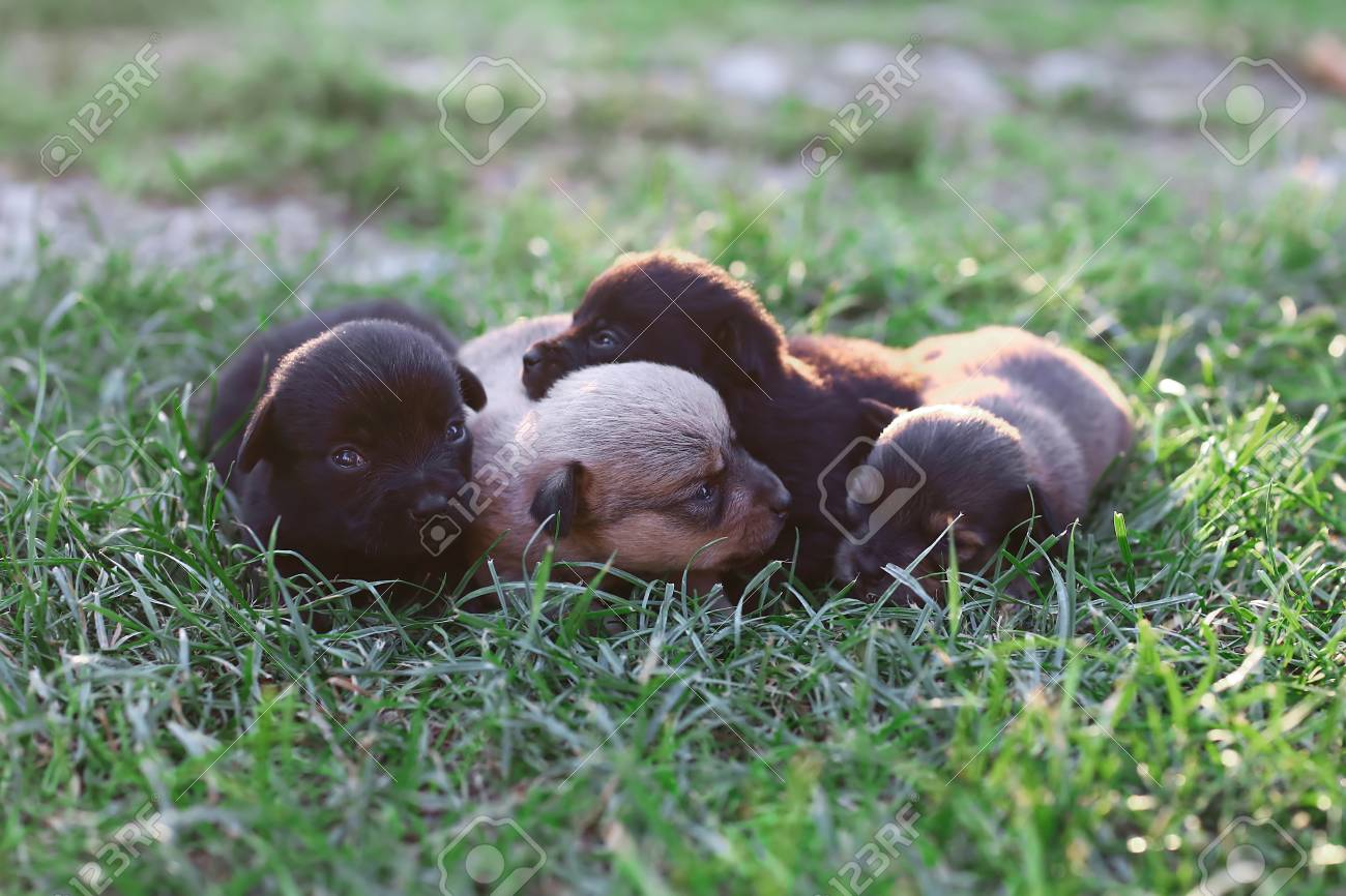 Funny Smiling Puppies Sleeping Outdoors On A Green Summer Meadow Stock Photo Picture And Royalty Free Image Image 110083042